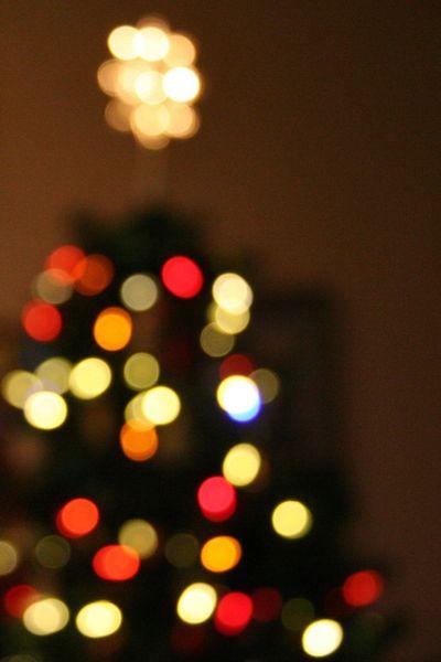 03dec2010-tree