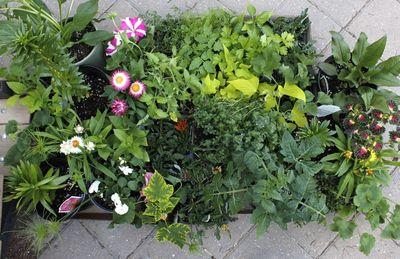 Plants-13may12